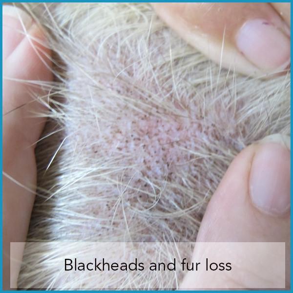 Black Mites On My Dog