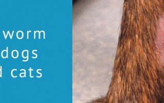 Ringworm in dogs and cats