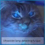 Ultraviolet lamp to detect fungus