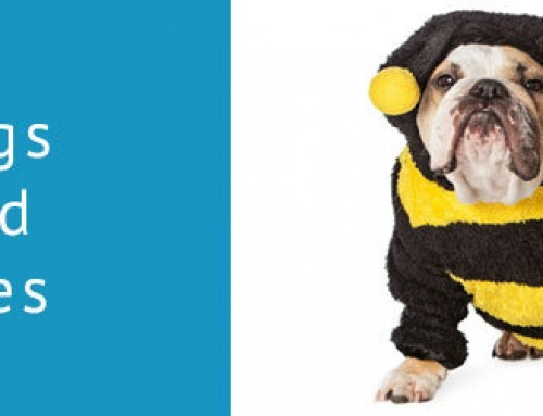 Bee stings and dogs